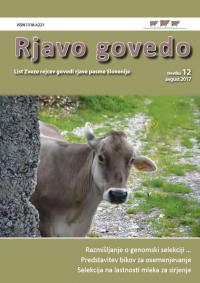 Rjavo govedo 12
