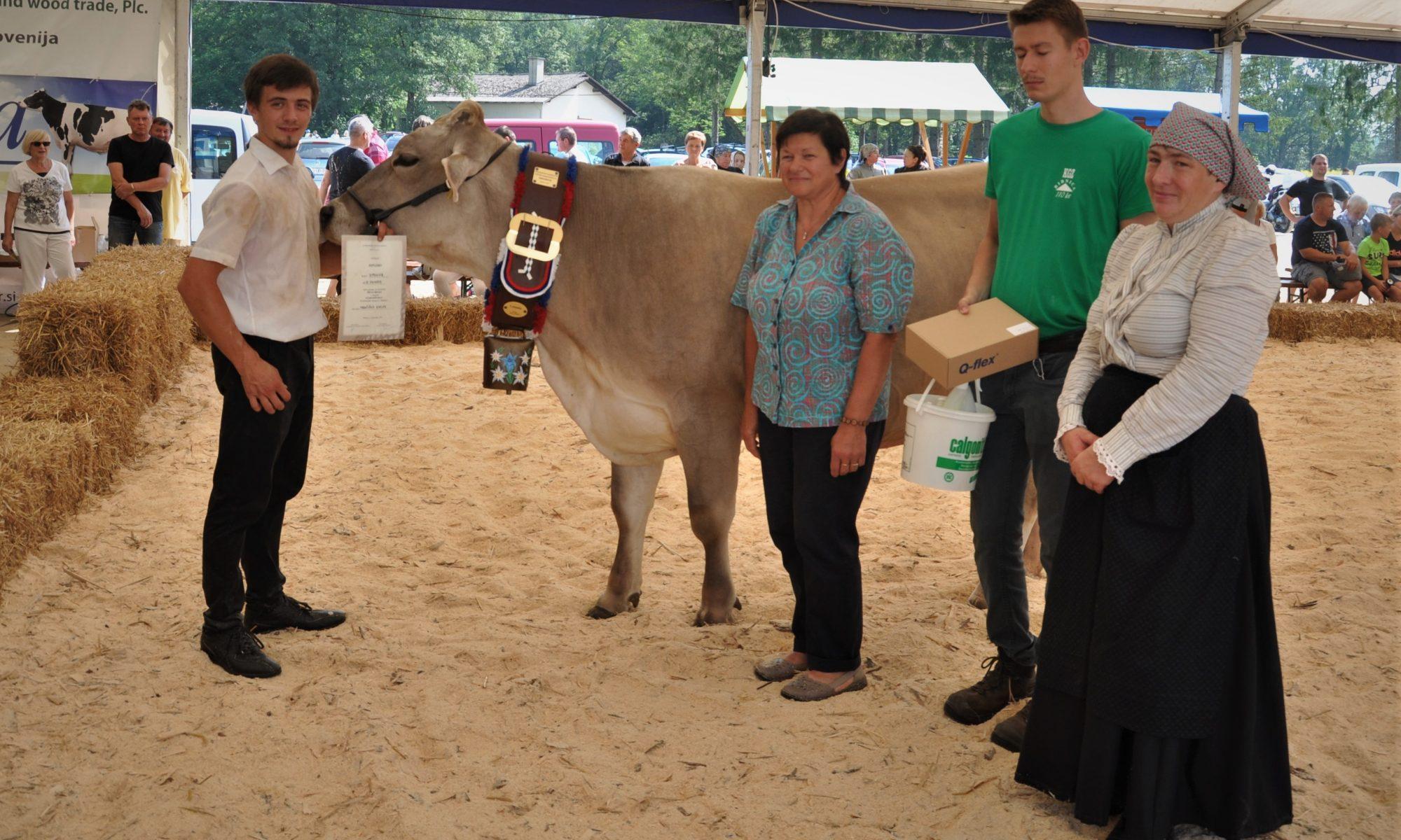 Predsednica zveze Sonja Arlič je podarila častni zvonec in nagrade najboljšim starejšim kravam rjave pasme